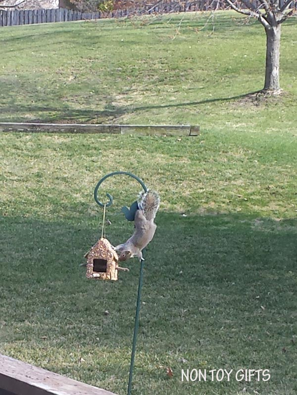 Squirrel eating from a seed feeder.