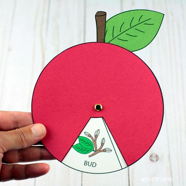 Apple life cycle craft preschool