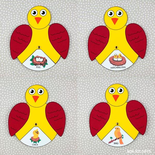 Bird life cycle wheel for preschoolers