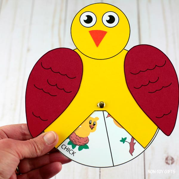 Bird life cycle interactive craft